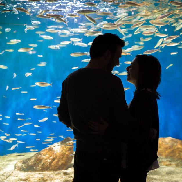 Vincent + Marie